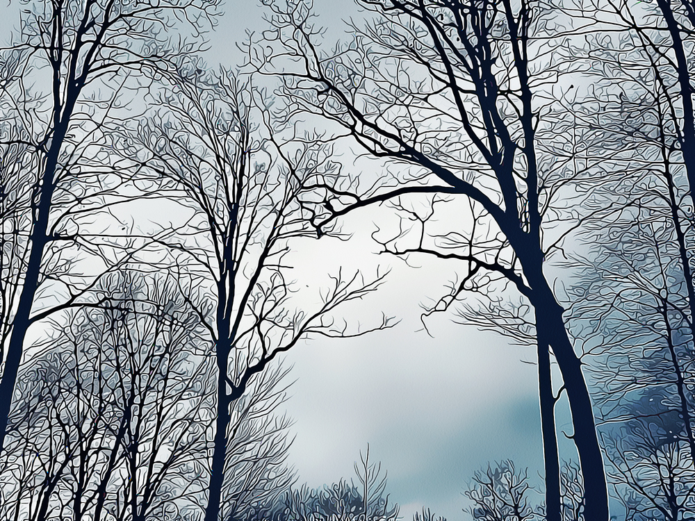 Tree,Branch,Sky