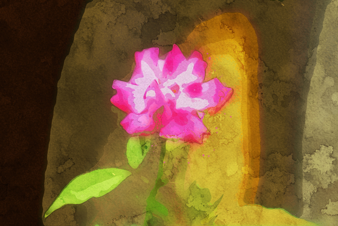 Pink,Petal,Flower