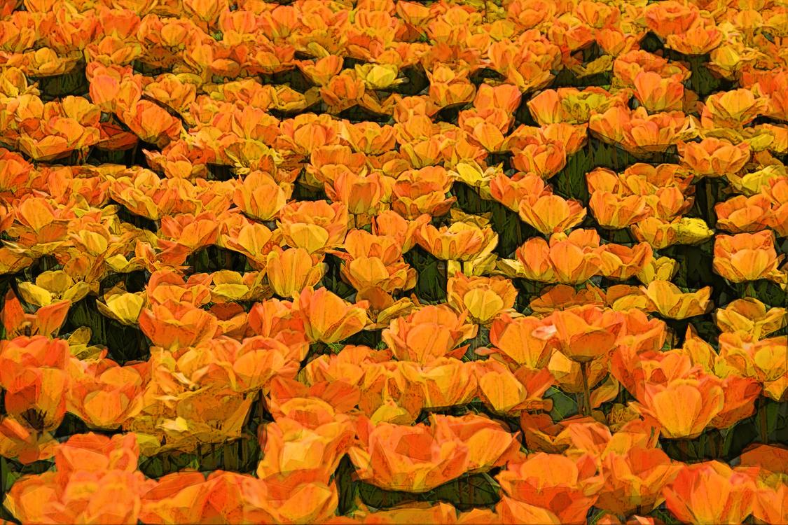 Orange,Flower,Yellow