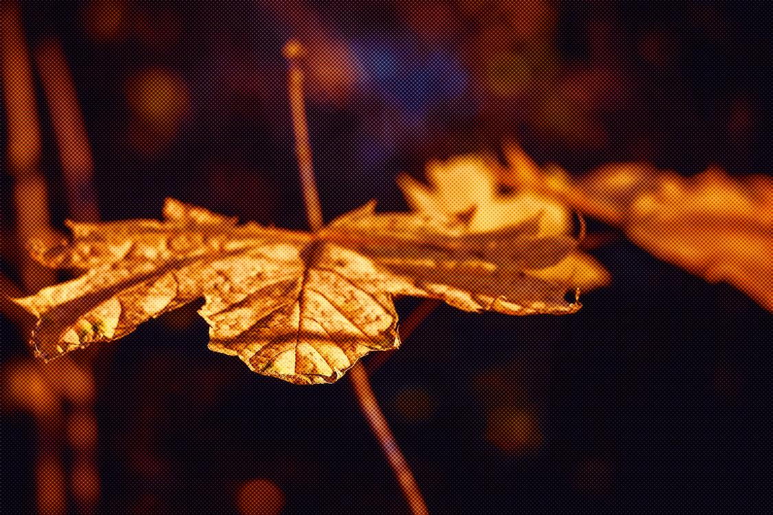 Leaf,Orange,Light
