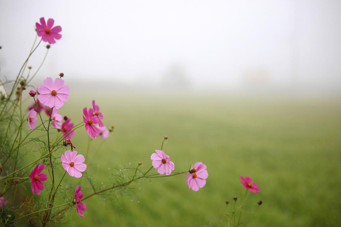 Flower,Flowering Plant,Nature