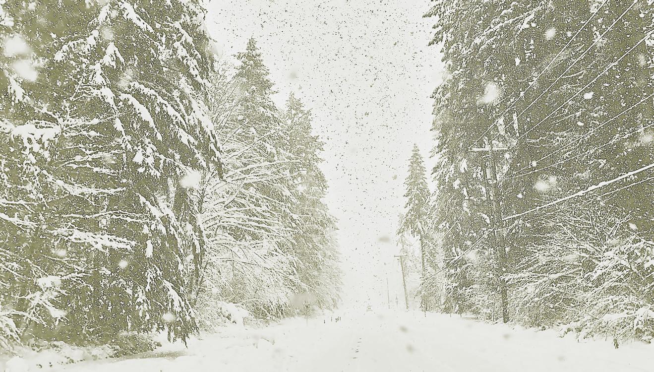 Snow,White,Winter