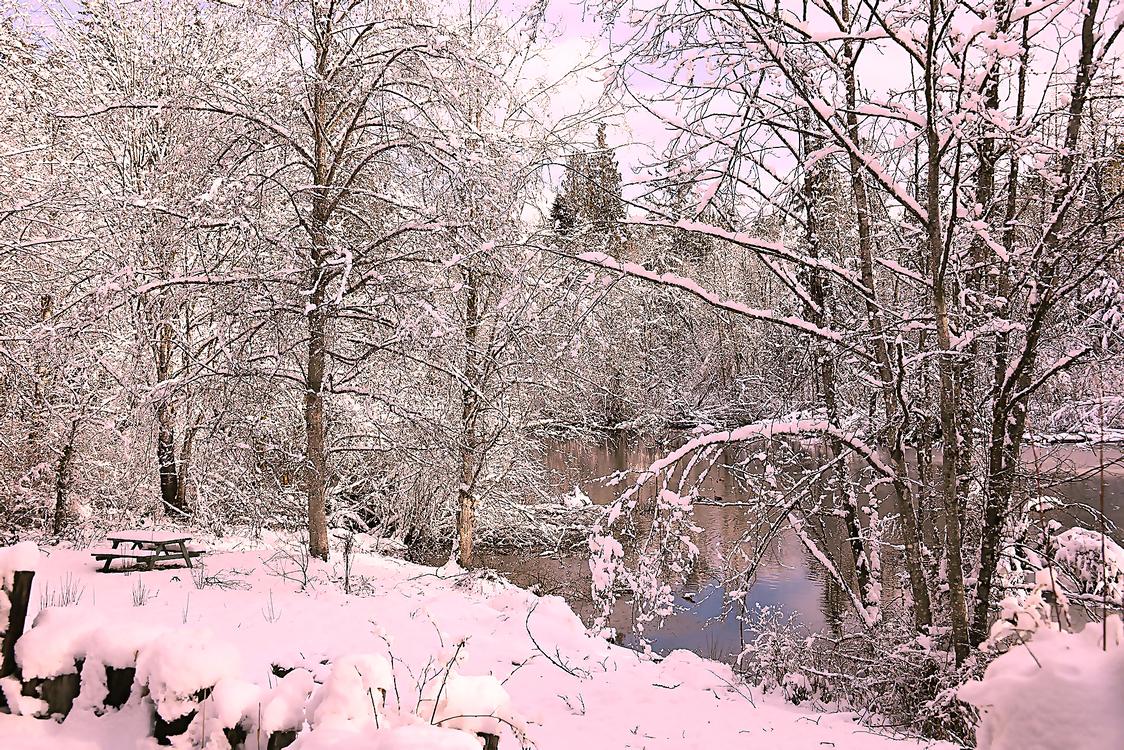 Snow,Winter,Tree