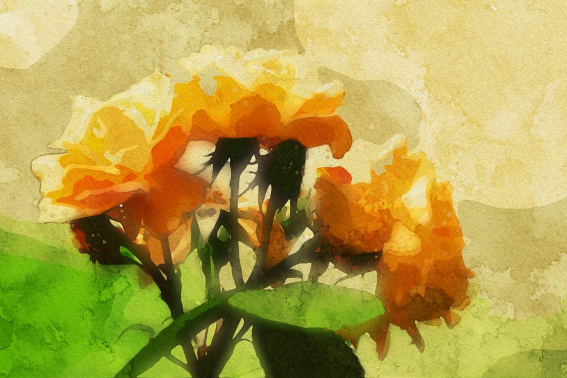 Watercolor Paint,Orange,Flower