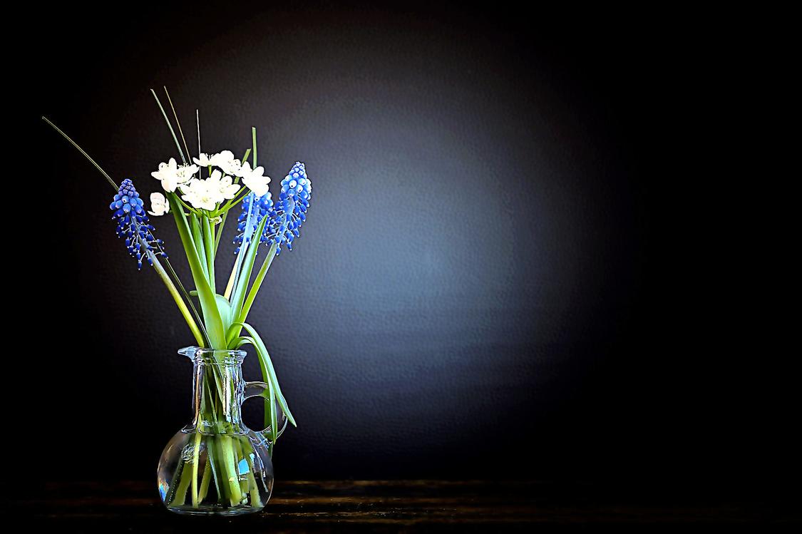 Flower,Still Life Photography,Blue