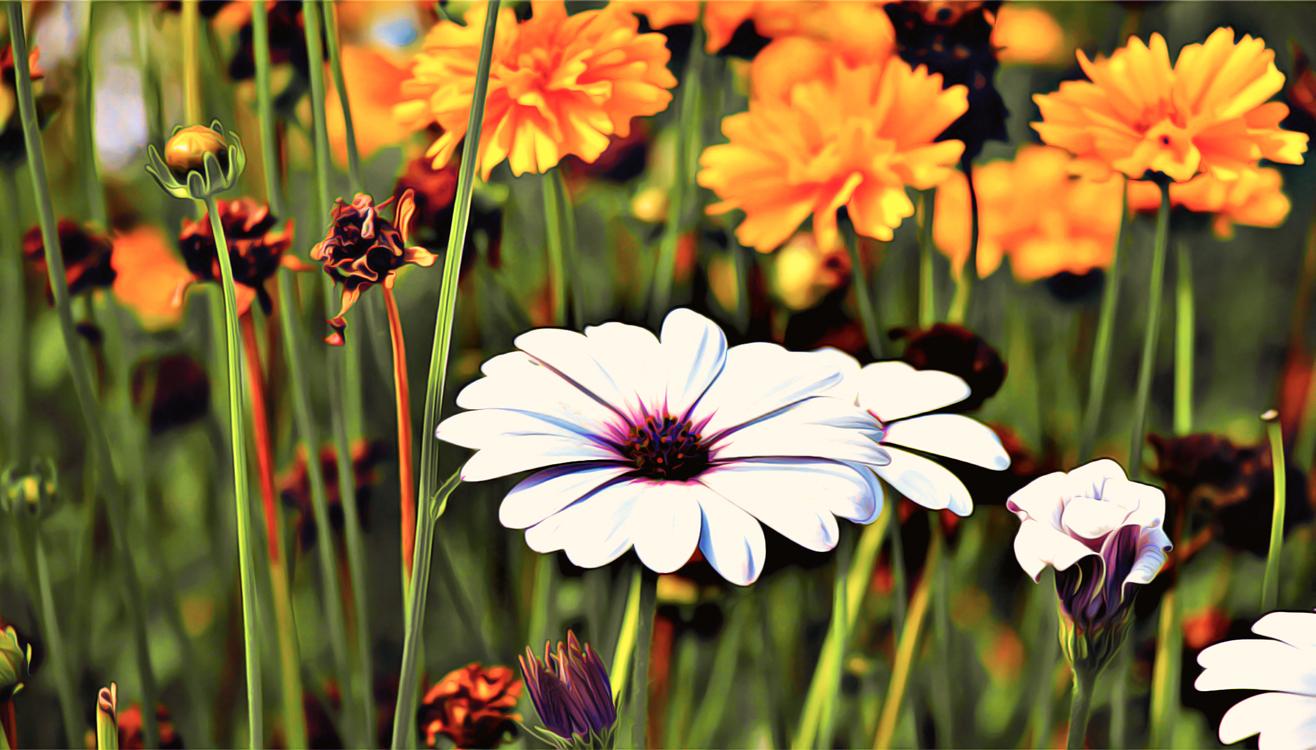 Flowering Plant,Flower,Petal
