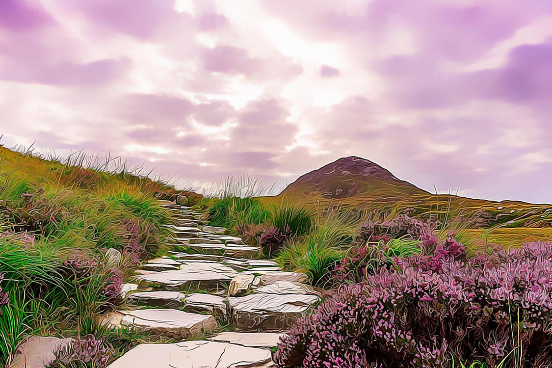 Nature,Natural Landscape,Lavender