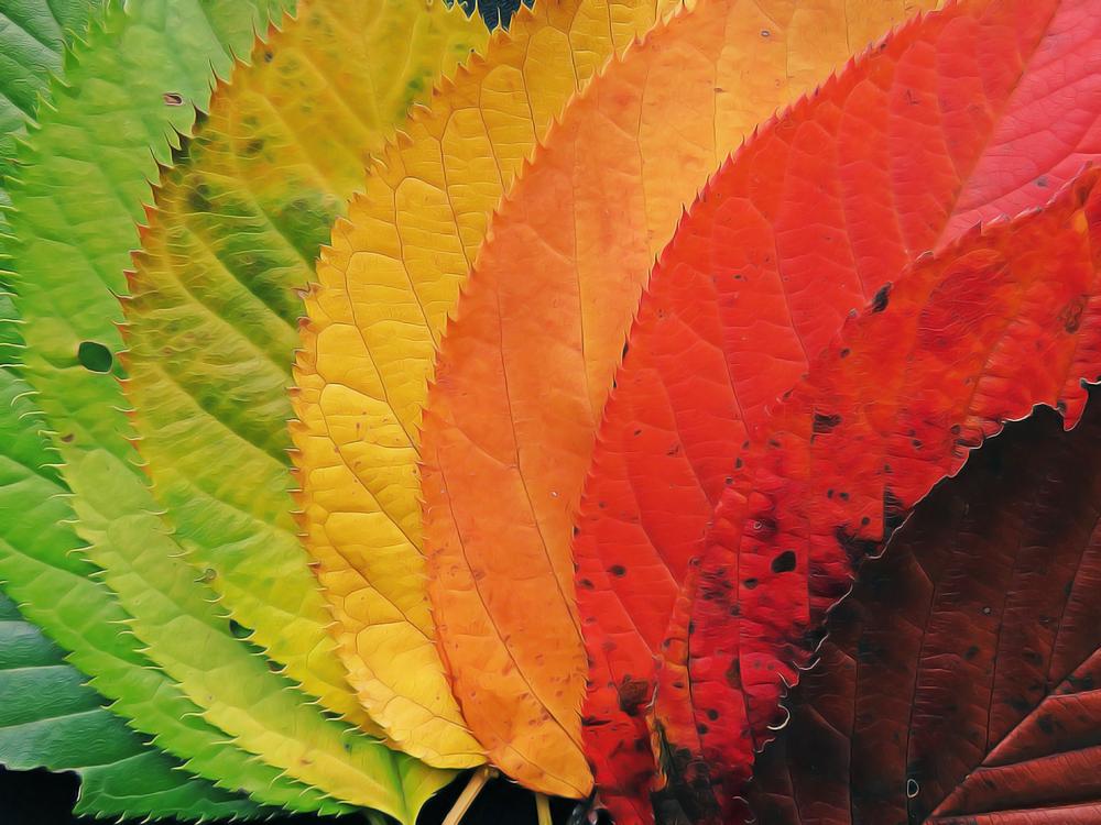Leaf,Plant,Flower