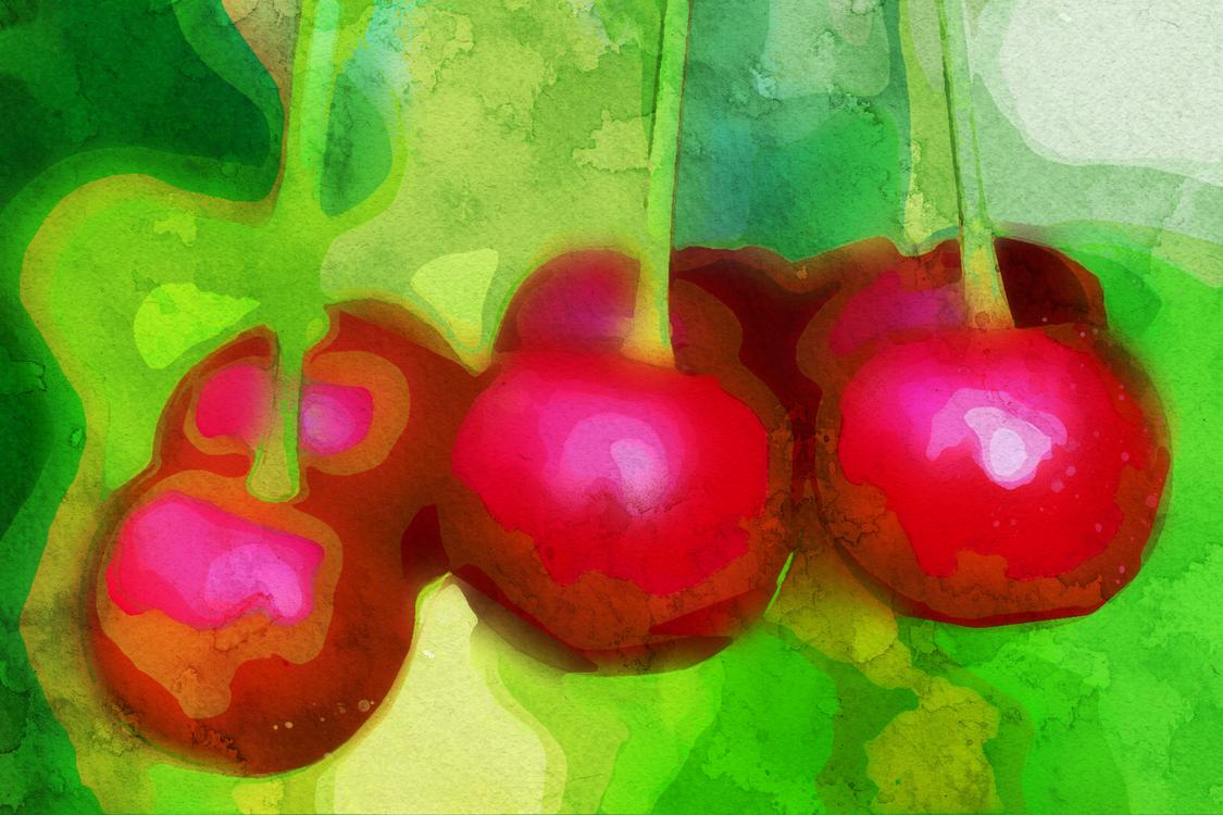 Fruit,Cherry,Plant