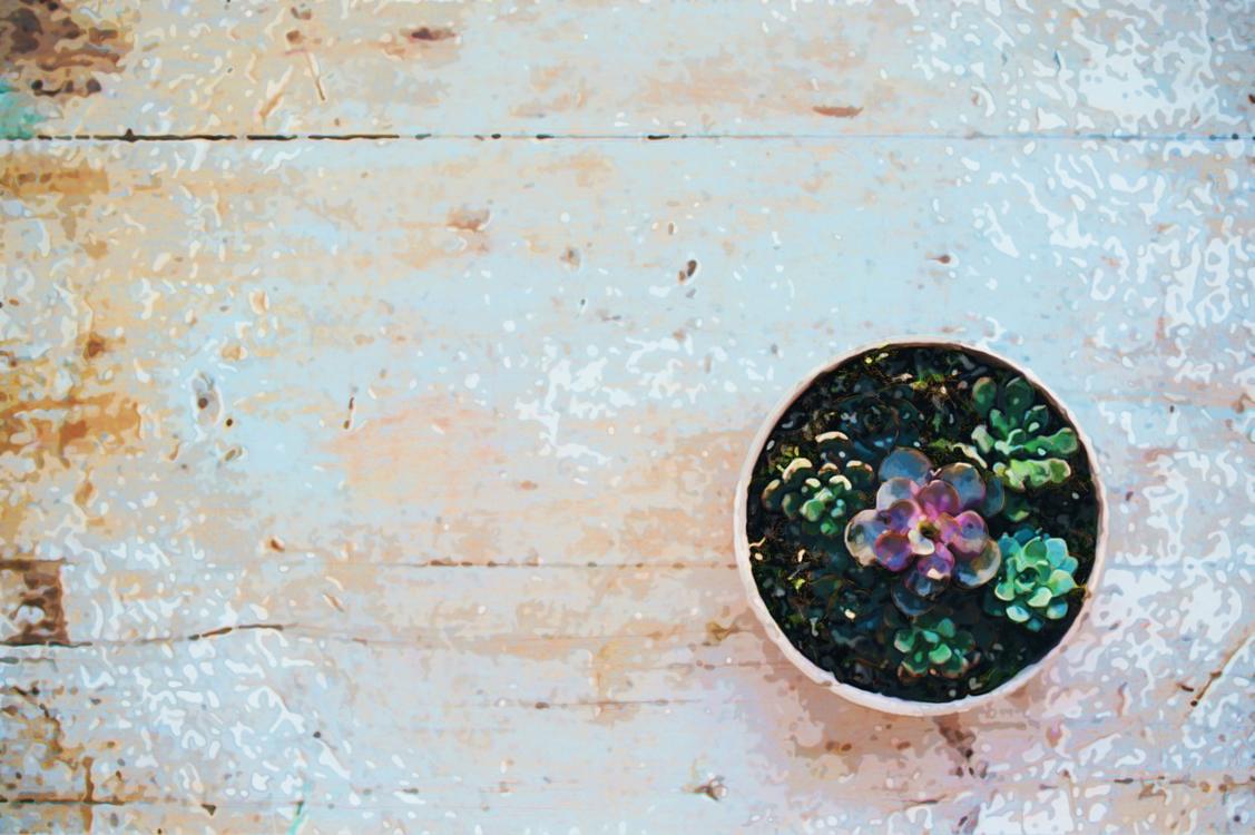 Wall,Visual Arts,Plant