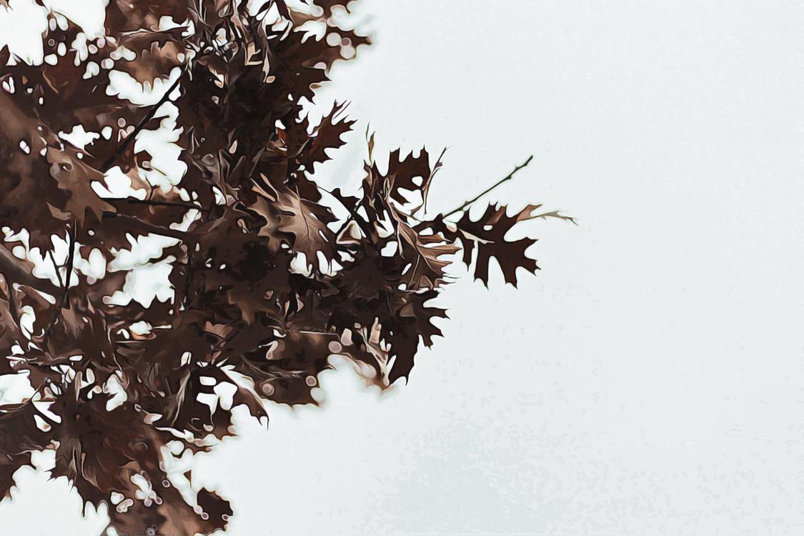 Tree,Leaf,Branch