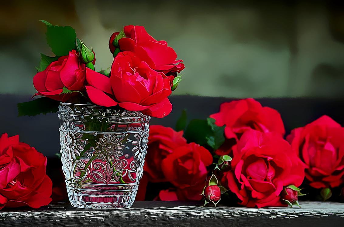 Flower,Red,Garden Roses