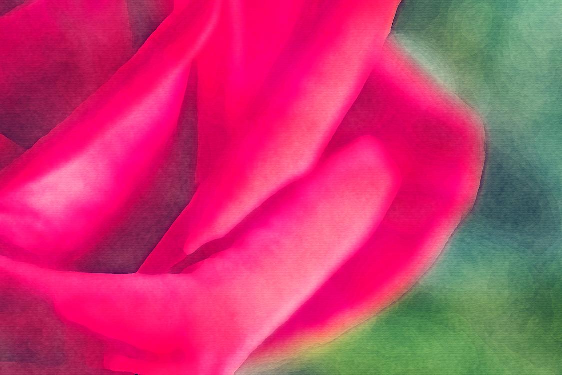 Pink,Petal,Red