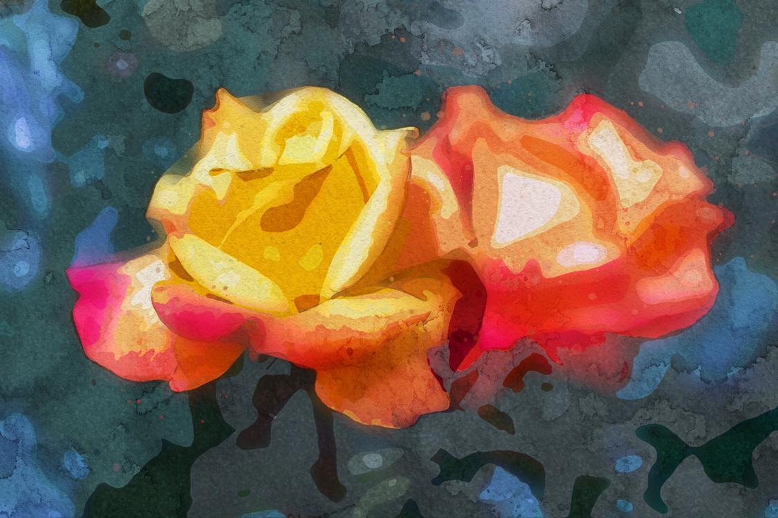 Garden Roses,Rose,Painting