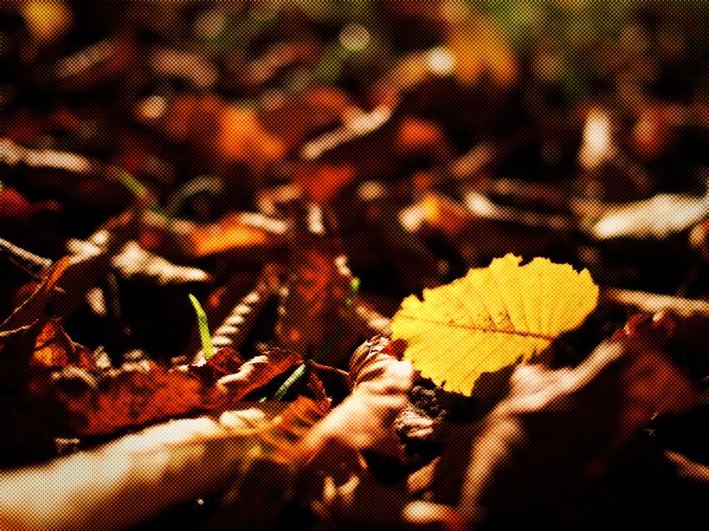 Leaf,Nature,Autumn