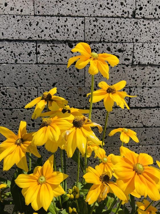 Flower,Flowering Plant,Yellow