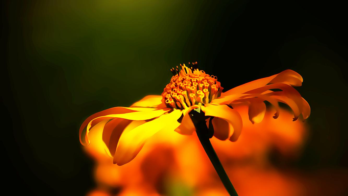 Flower,Macro Photography,Orange