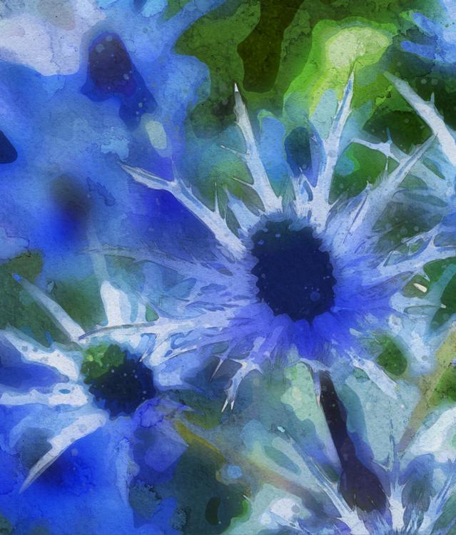 Blue,Flower,Plant