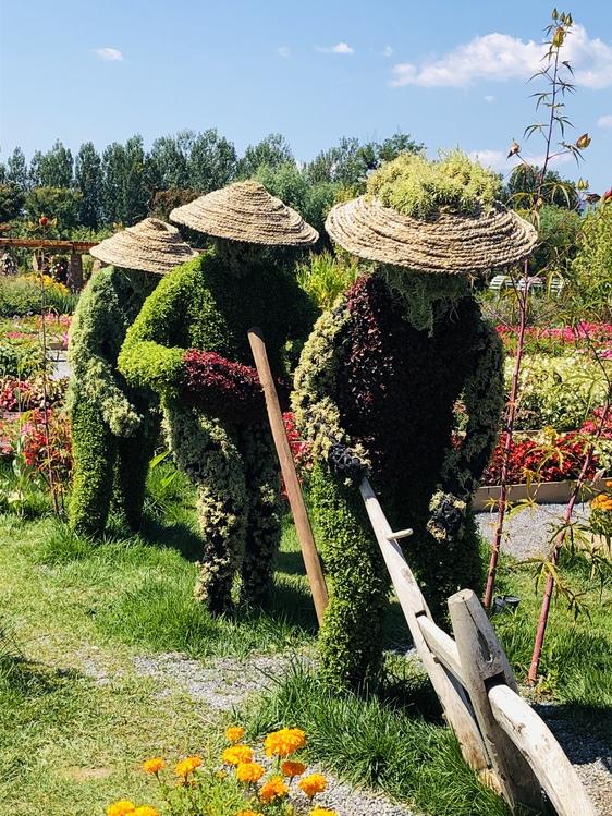 Garden,Flower,Plant