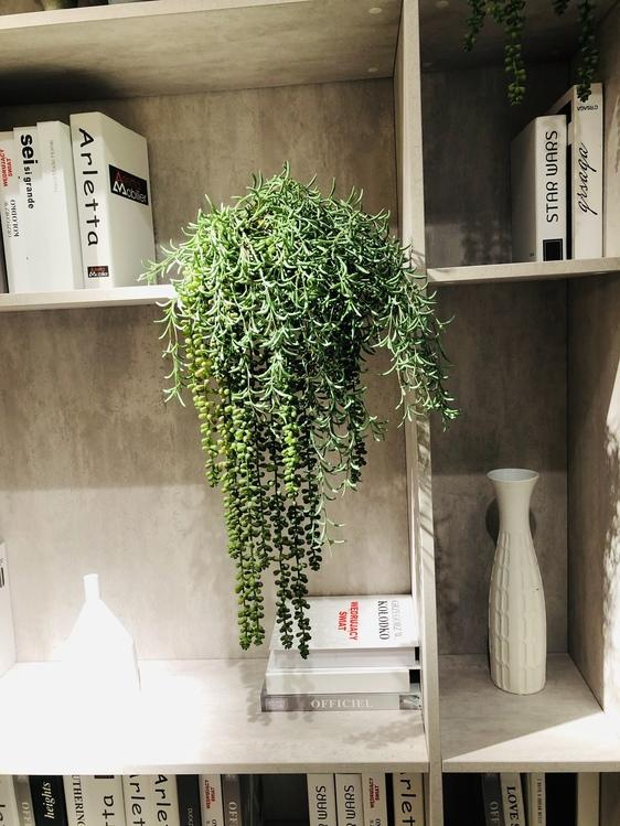 Shelf,Flowerpot,Plant