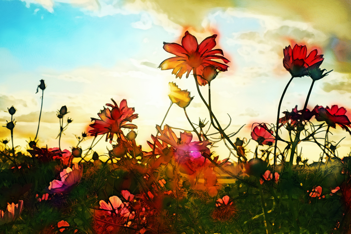 Nature,Sky,Natural Landscape