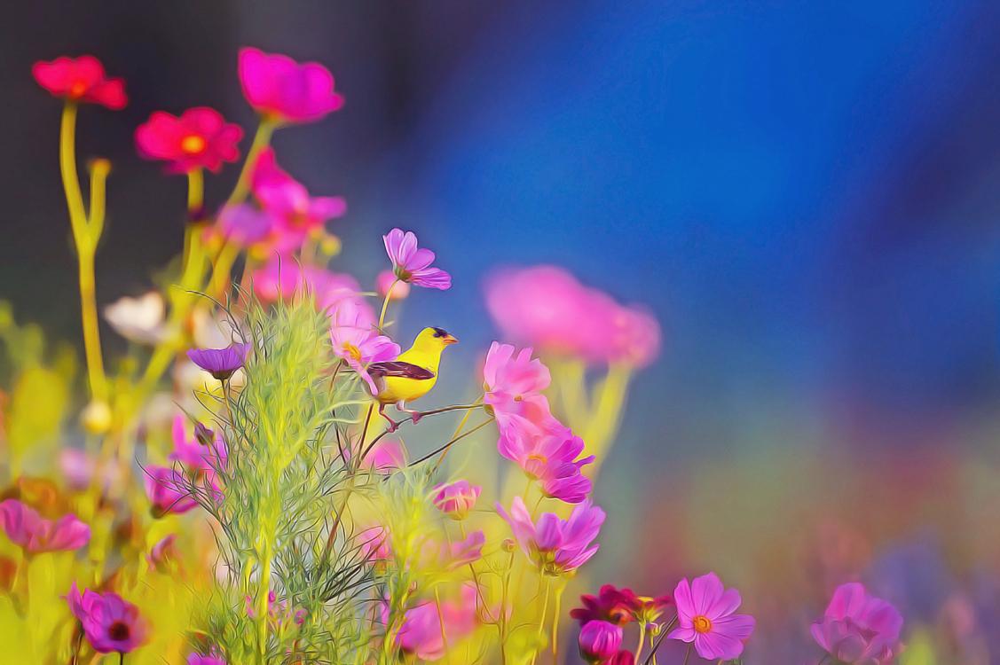 Flower,Pink,Plant