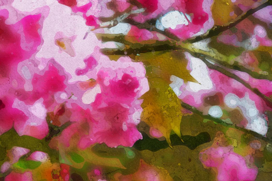 Pink,Flower,Petal