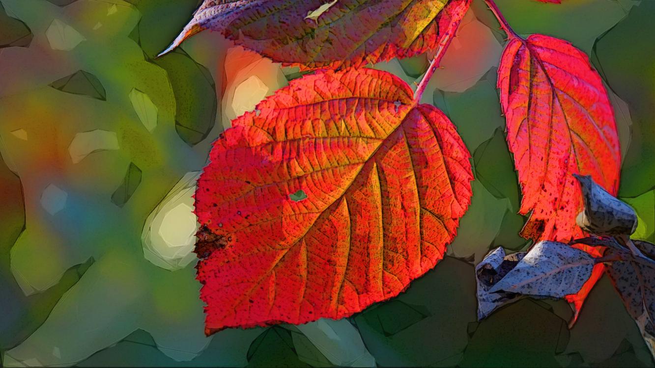 Leaf,Red,Flower