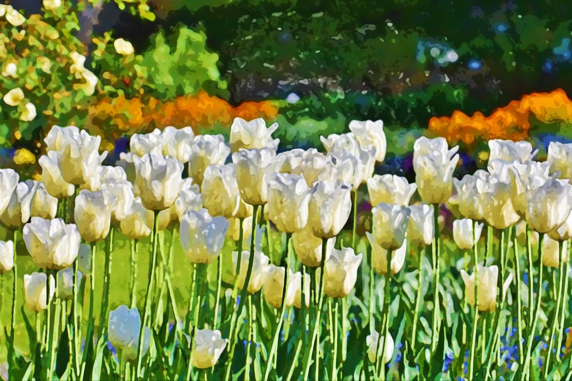 Flower,Natural Landscape,Meadow