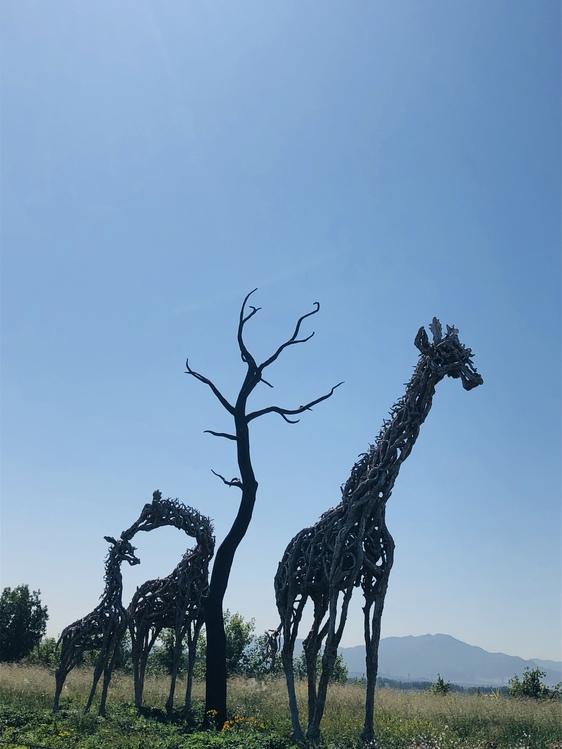 Giraffe,Giraffidae,Tree