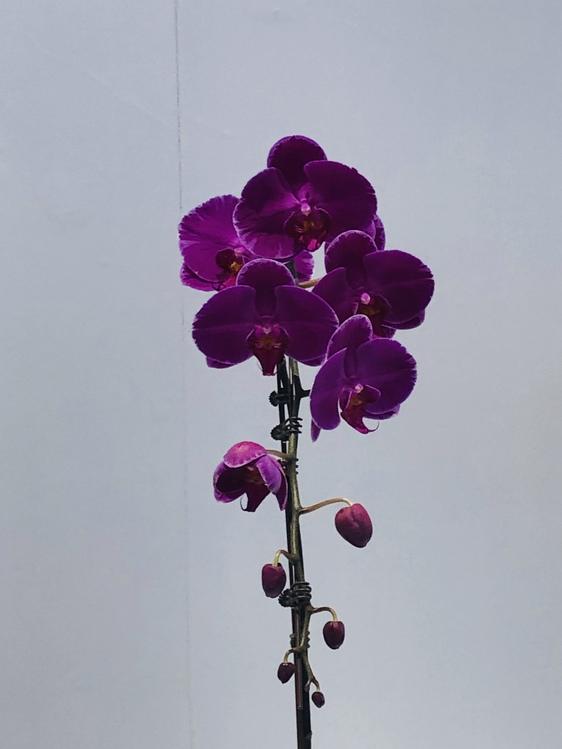 Flower,Violet,Purple