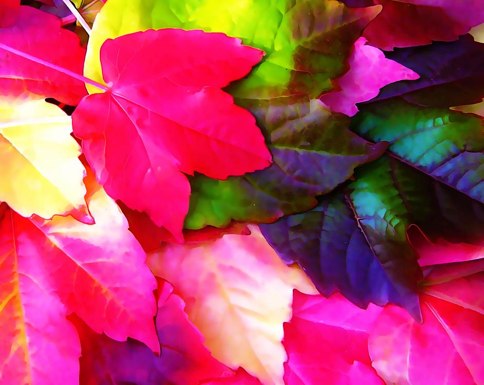 Leaf,Petal,Pink