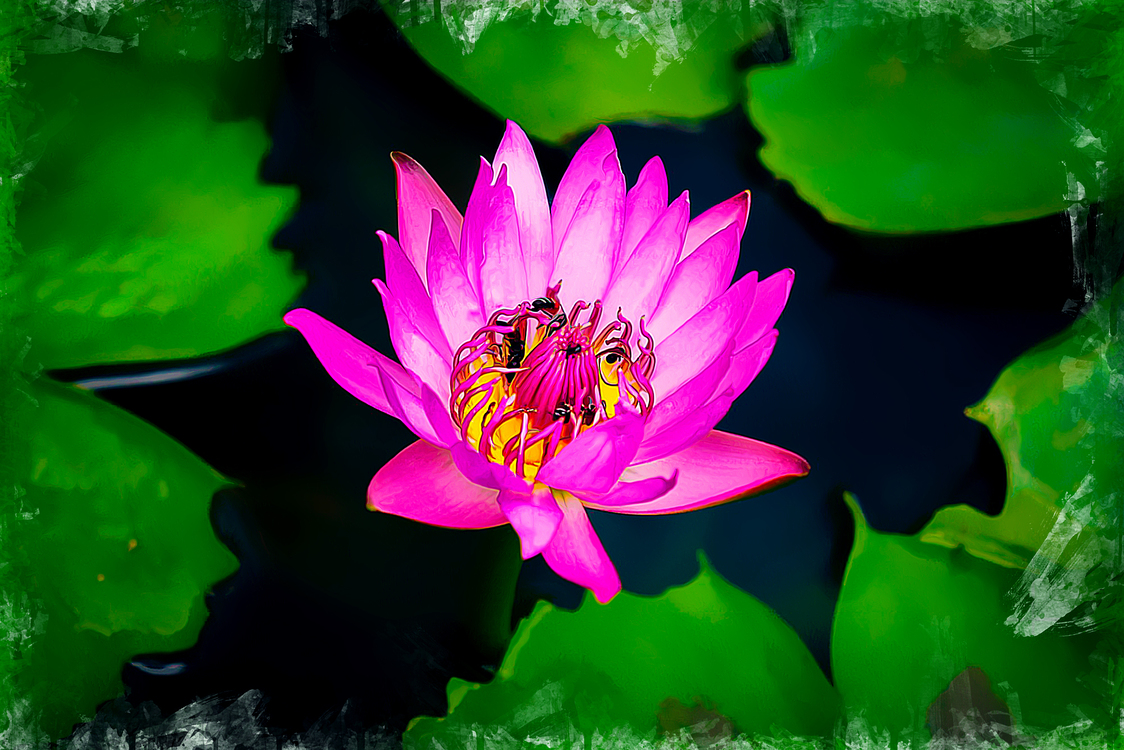 Flower,Sacred Lotus,Petal