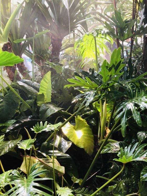 Vegetation,Natural Environment,Plant
