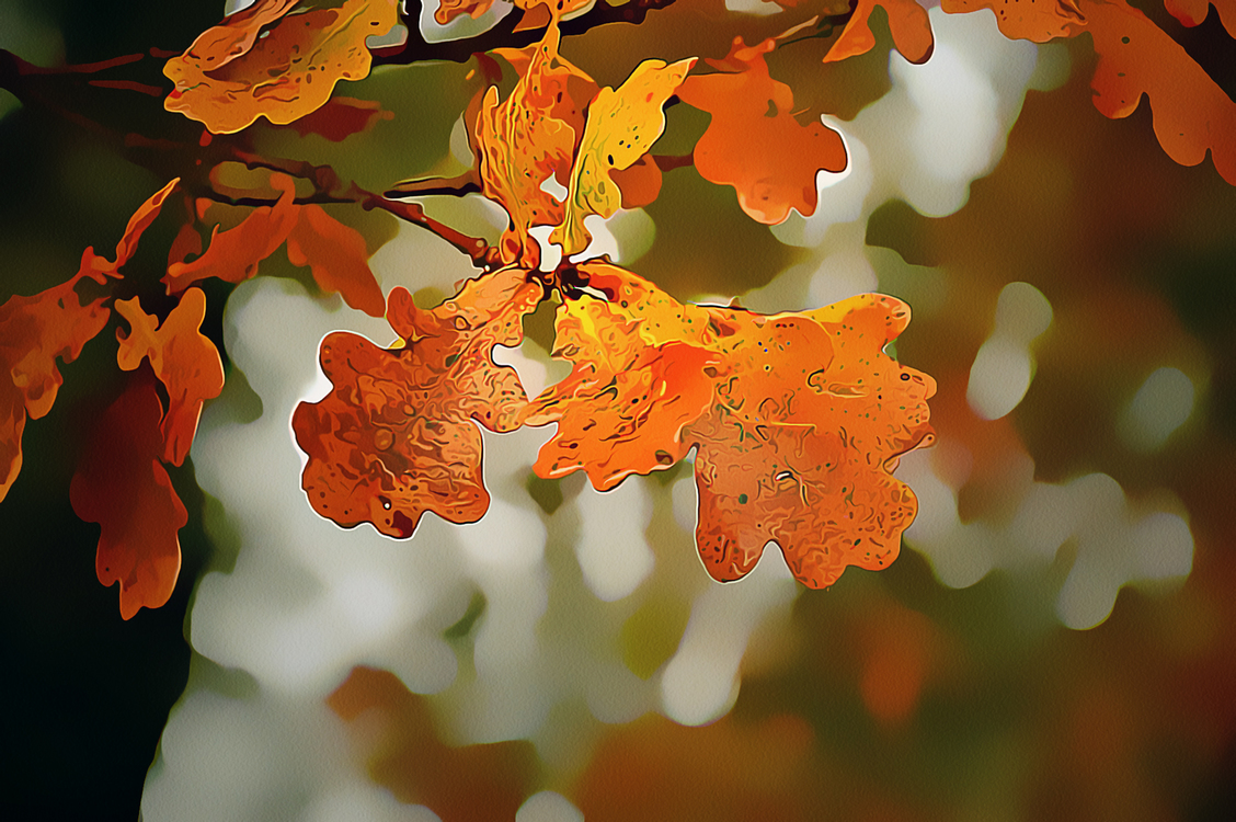 Leaf,Tree,Plant