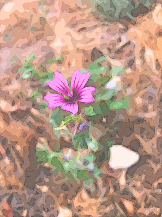 Flower,Petal,Plant