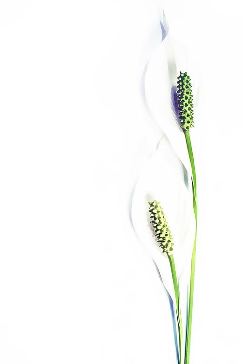 Green,Plant,Flower