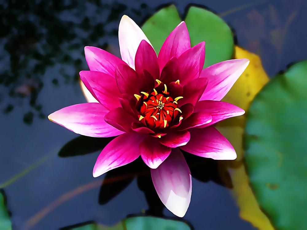 Flower,Petal,Flowering Plant