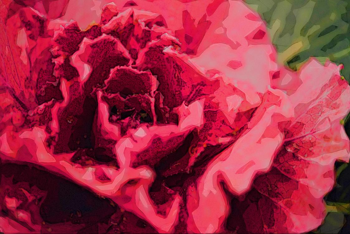 Red,Pink,Petal