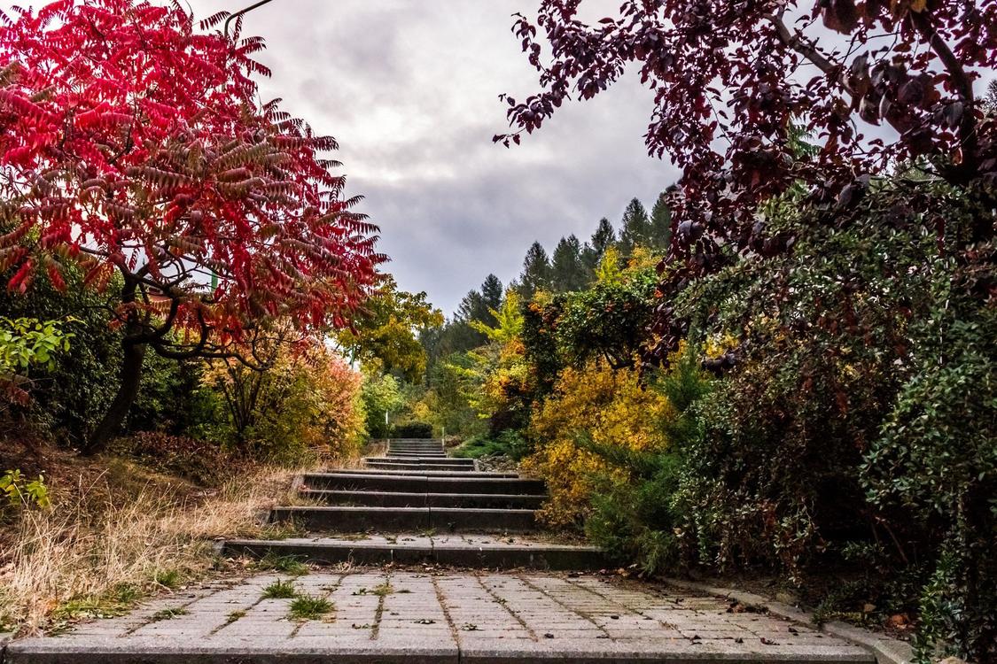 Tree,Nature,Natural Landscape