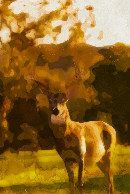 Wildlife,Painting,Deer