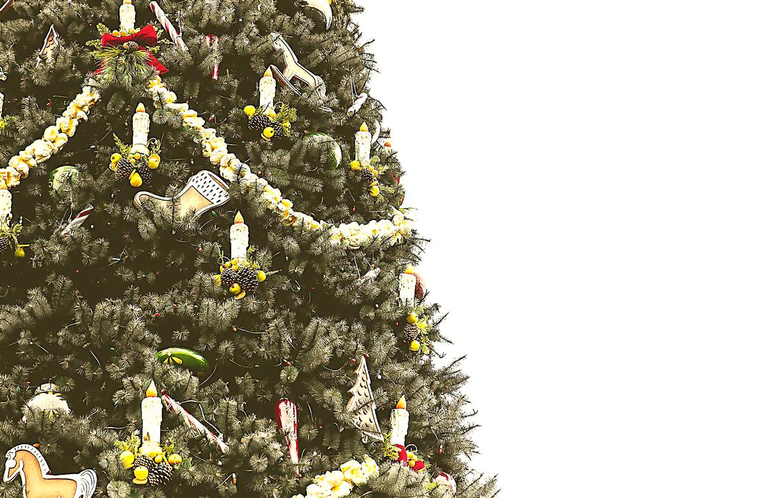 Tree,Plant,Christmas Tree