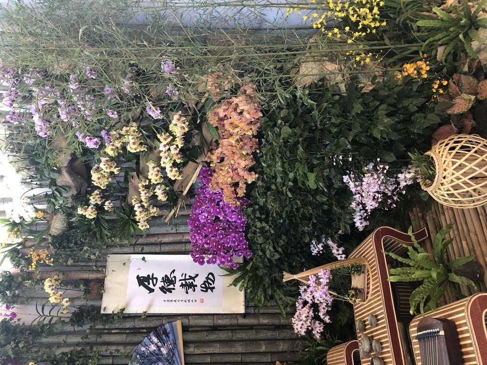 Flower,Plant,Garden