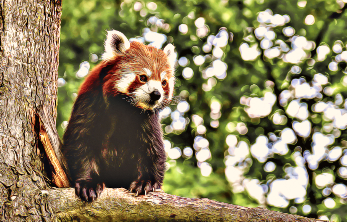 Nature,Red Panda,Terrestrial Animal