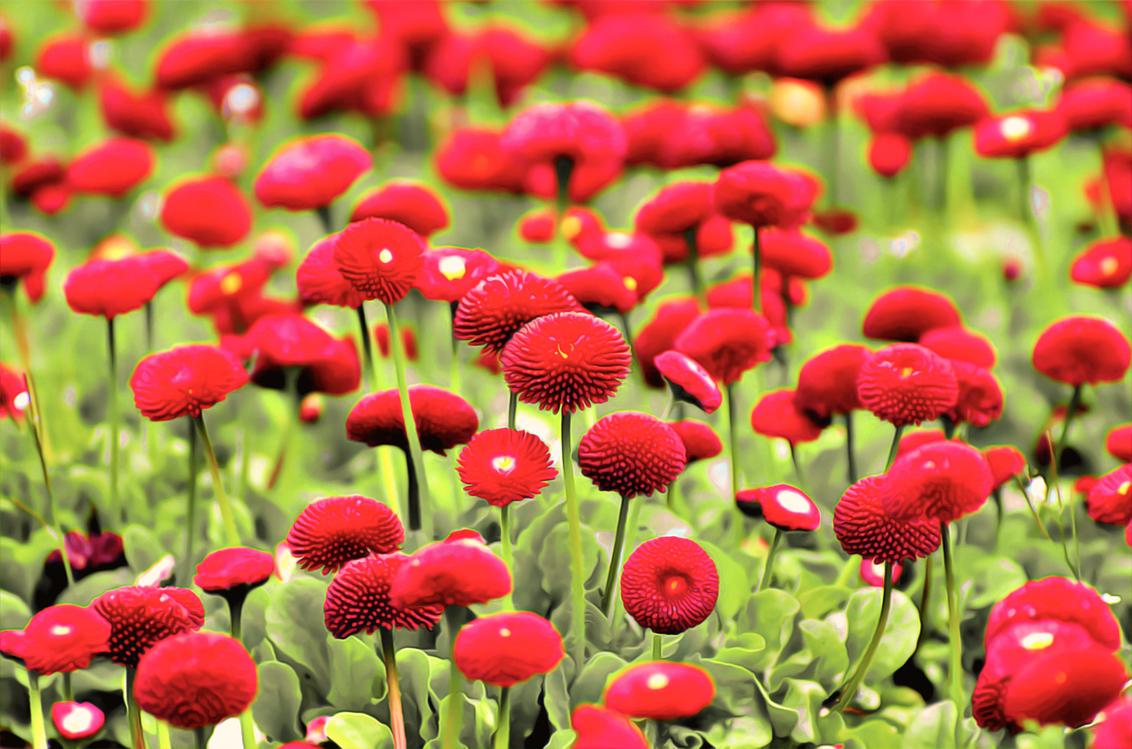 Flowering Plant,Flower,Plant