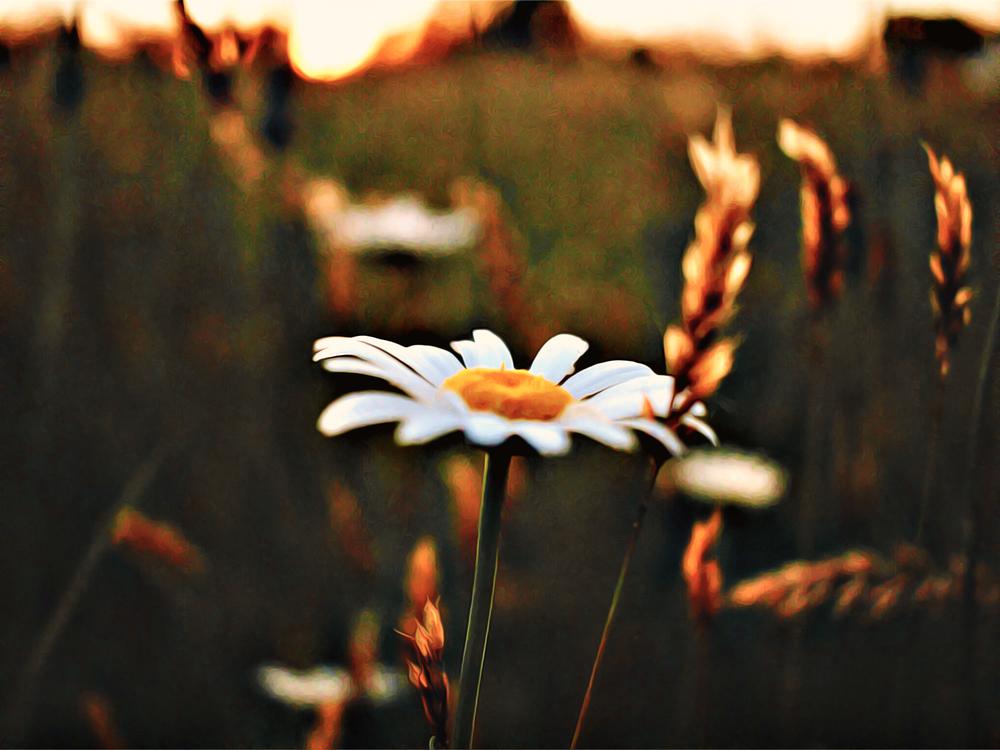 Flower,Orange,Plant