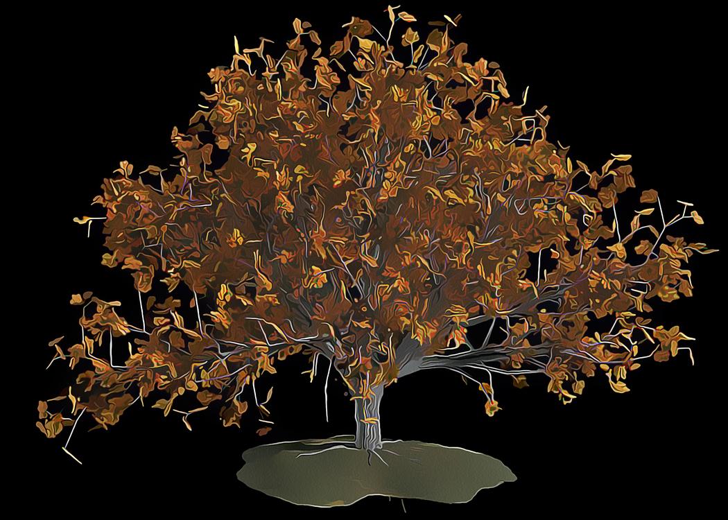 Tree,Leaf,Lighting