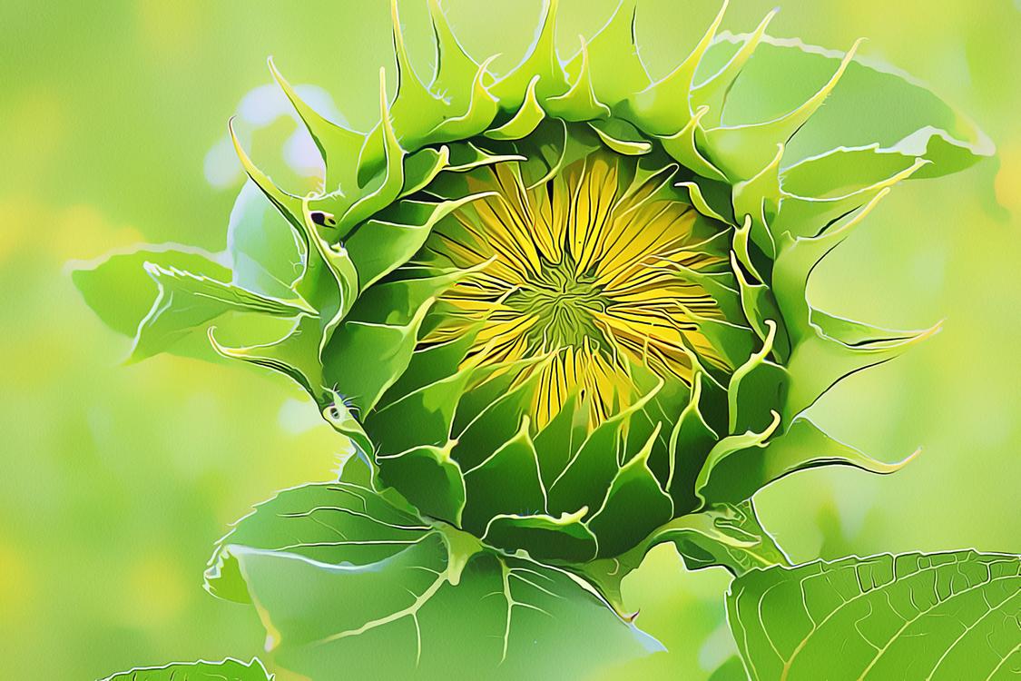 Flower,Green,Plant