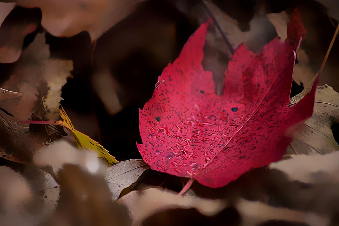 Leaf,Red,Pink