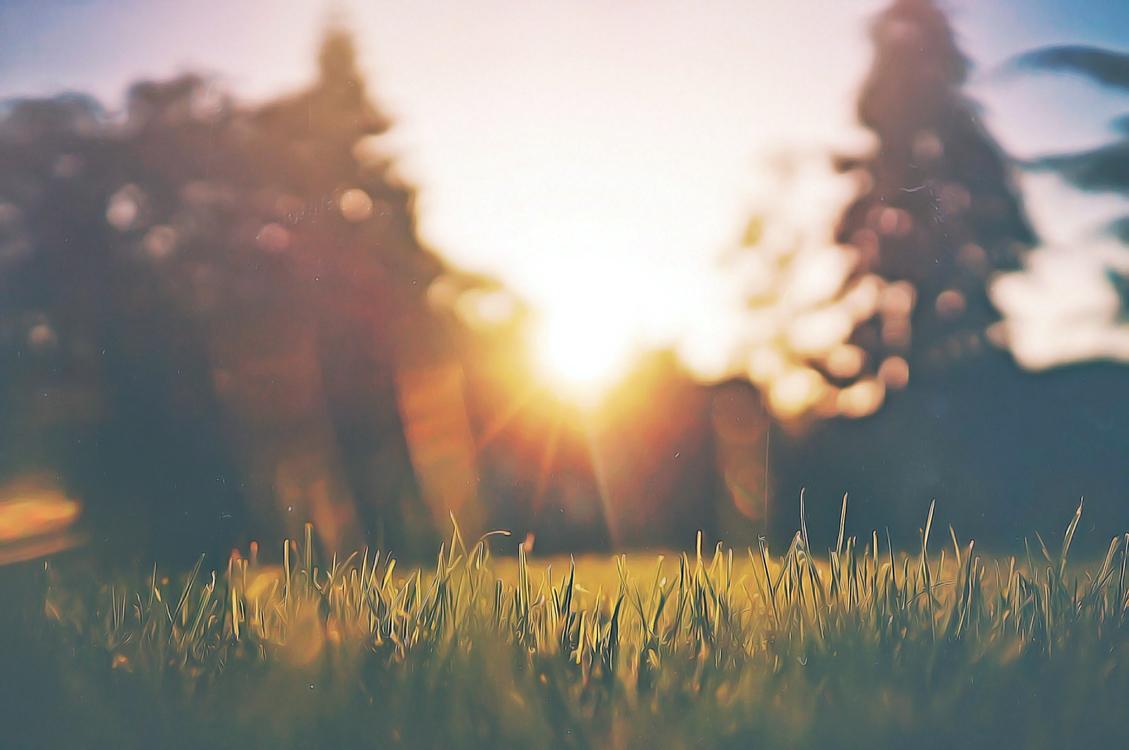 Sky,Nature,Grass